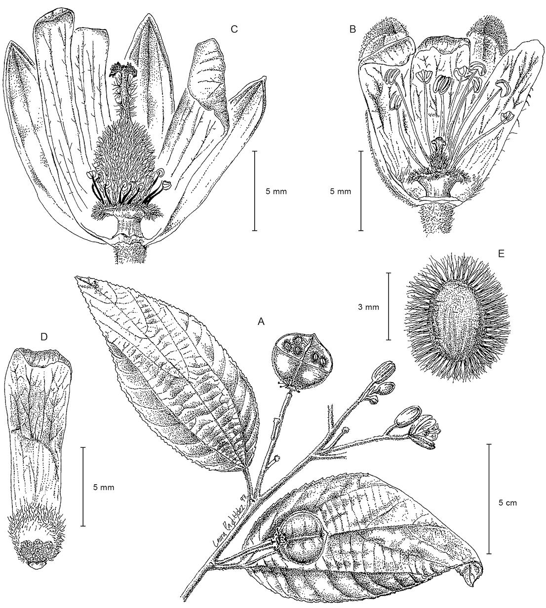 Flores unisexual ejemplos de prefijos