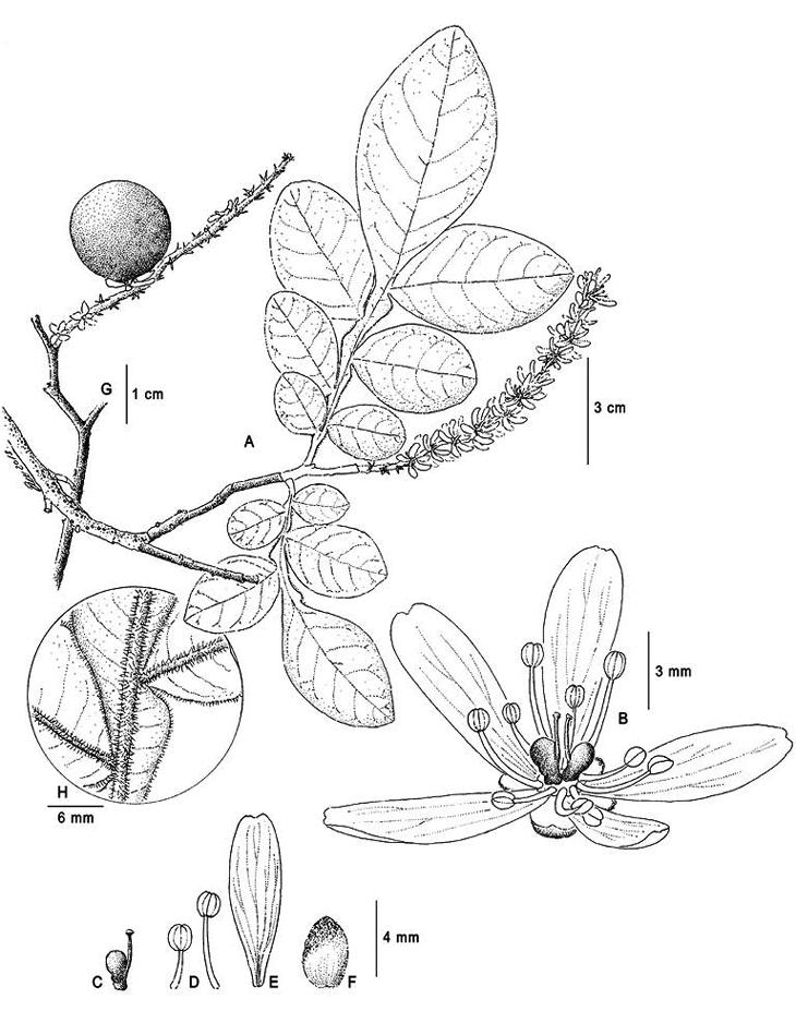 fig1.tif