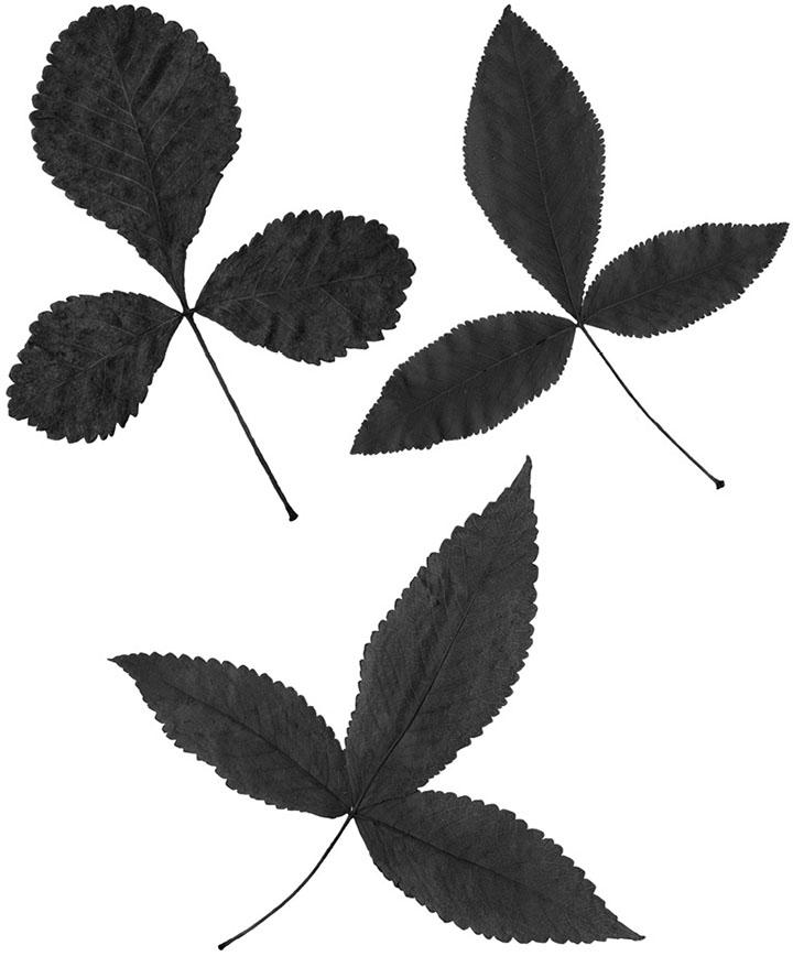 Fig2%20pag87.tif